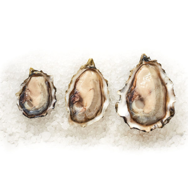 Goose Point Blue Band Oysters Open, XS, S and M